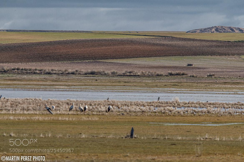 Photograph castilla wetlands by Martín Pérez on 500px