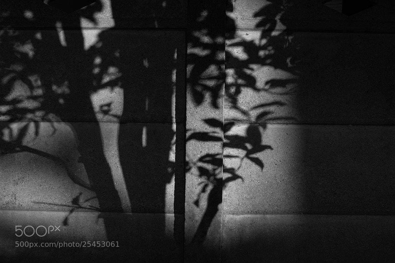 Photograph Draw on the wall by Masaki Yoshida on 500px