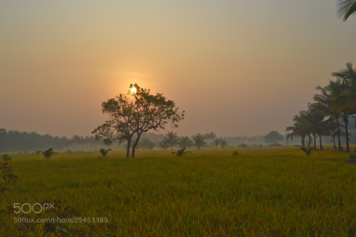 Photograph Sunrice by sajan Laks on 500px