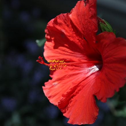 Flower, Canon EOS 5D MARK III, Canon EF 24-70mm f/2.8L II USM