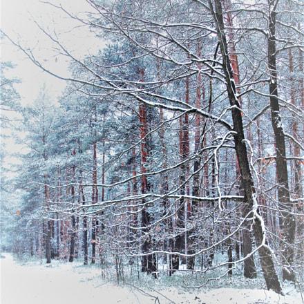 forest, Fujifilm A850