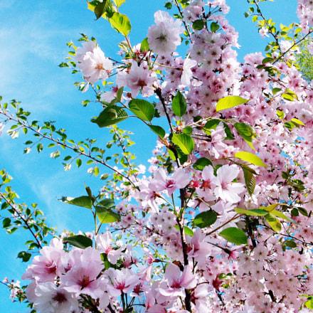 flowers, Fujifilm A850