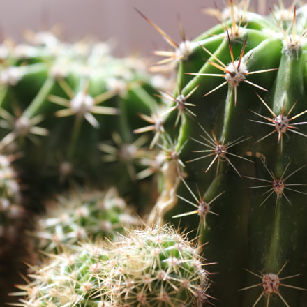 cactus, Canon EOS 700D, Canon EF-S 18-55mm f/3.5-5.6 III