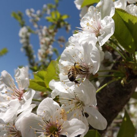 Bee, Fujifilm FinePix S4200