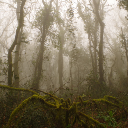 The forest lost, Pentax K-50, smc PENTAX-DA L 18-55mm F3.5-5.6 AL WR