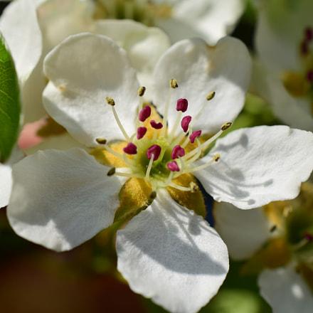 Close Up Blossom, Nikon D5300, AF-S DX Micro Nikkor 40mm f/2.8G