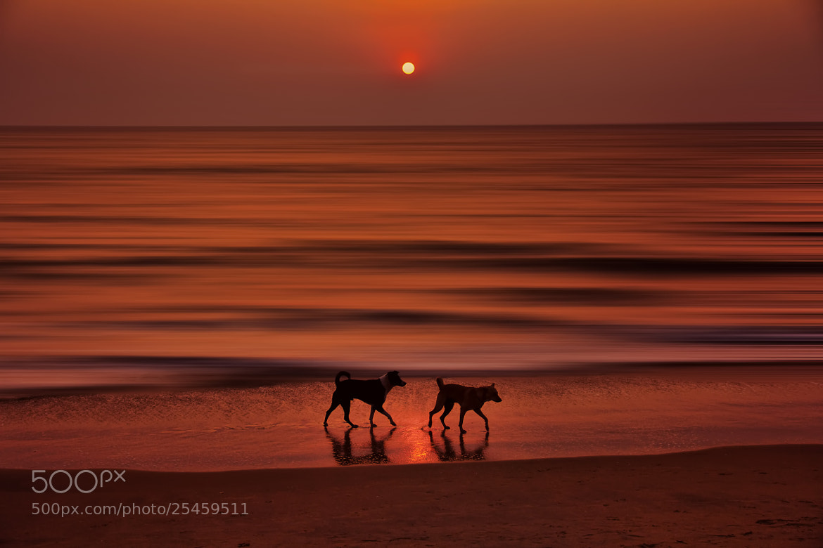 Photograph Sunset - 3 by Sreekumar  Mahadevan Pillai on 500px