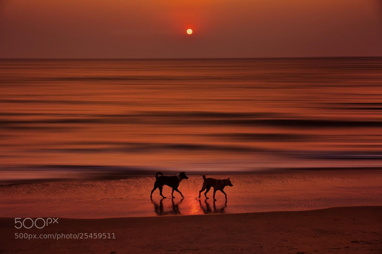 Photograph Sunset - 3 by Sreekumar Mahadevan Pillai on 500px