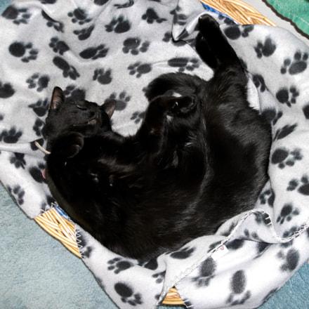 Black cat in basket, Sony DSC-N1