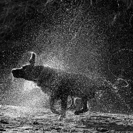 Wet dog, RICOH PENTAX K-3