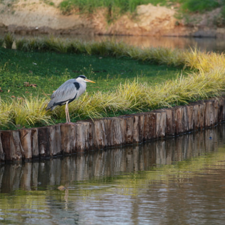 Bird&Lake, Canon EOS 1200D, Canon EF-S 55-250mm f/4-5.6 IS STM