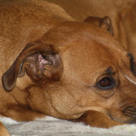 Thinking Dog, Canon EOS DIGITAL REBEL XS, Canon EF 75-300mm f/4-5.6