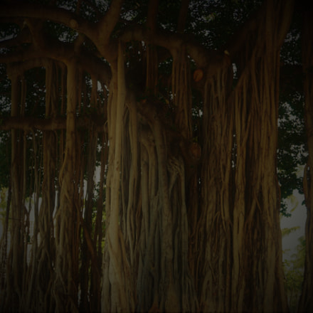 Banyan Tree (), Sony ILCE-6300, Sony E 18-50mm F4-5.6