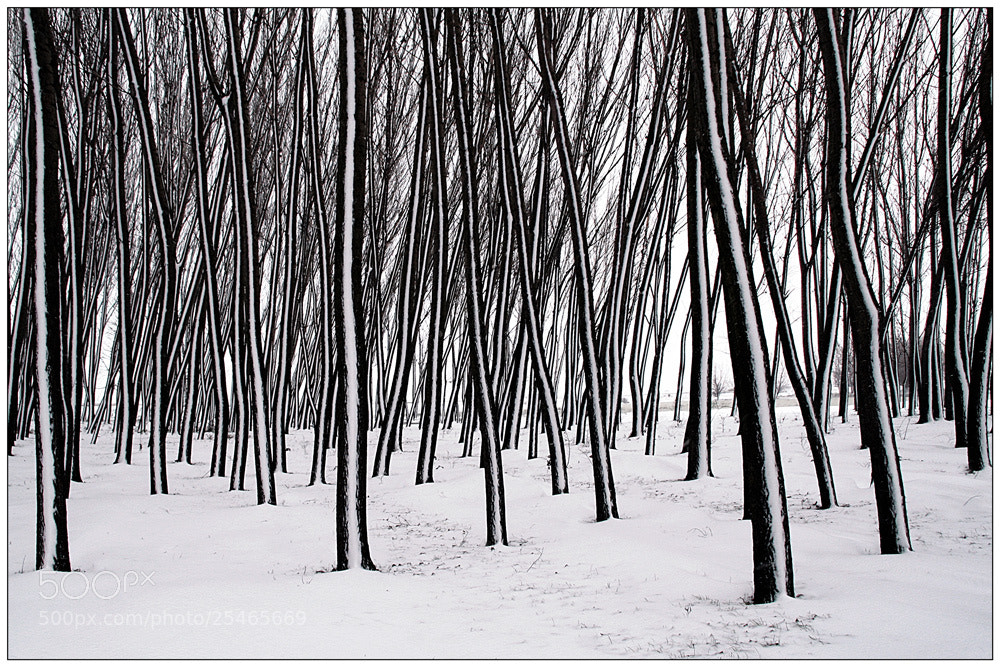 Photograph Organ winter by Stefan Andronache on 500px