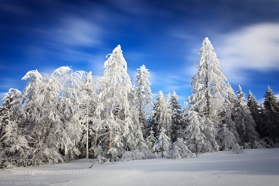 Photograph Snowy forest and moving clouds by Maxime Courty on 500px