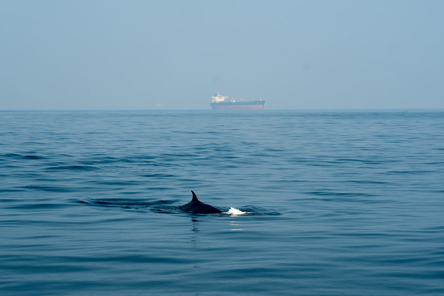Whale, автор — Good Fisherman на 500px.com