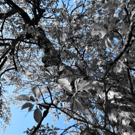 Spirit of the tree, Nikon D3200, AF-S DX Zoom-Nikkor 18-55mm f/3.5-5.6G ED II
