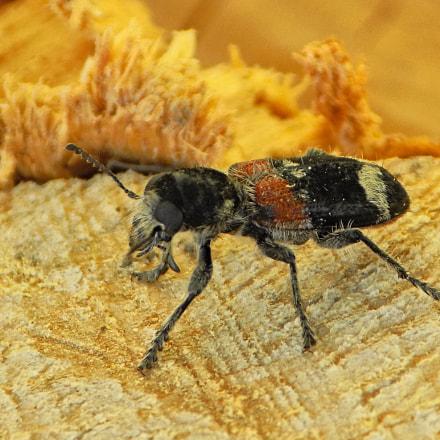 insect......., Nikon COOLPIX L330