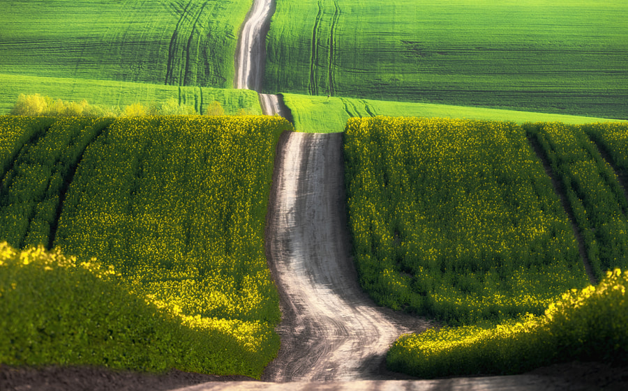 Spring road, автор — Andy58/András Schafer на 500px.com