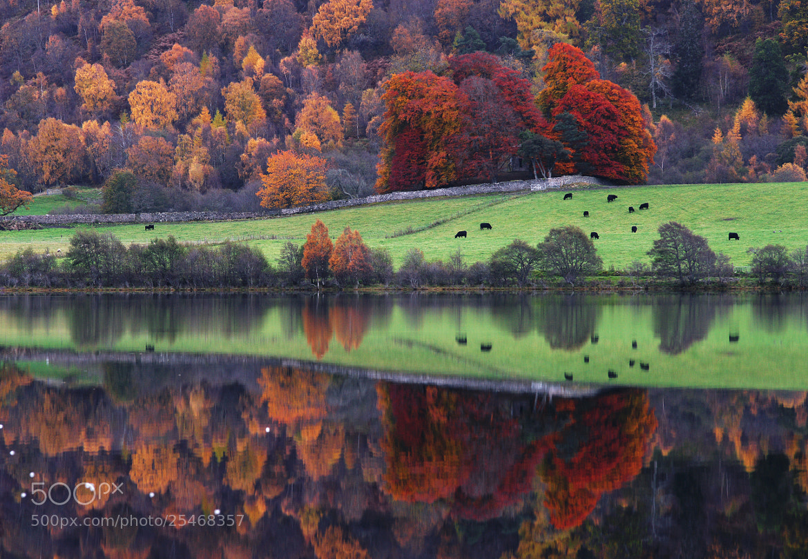 Photograph Autumn grazing by Kenny Muir on 500px