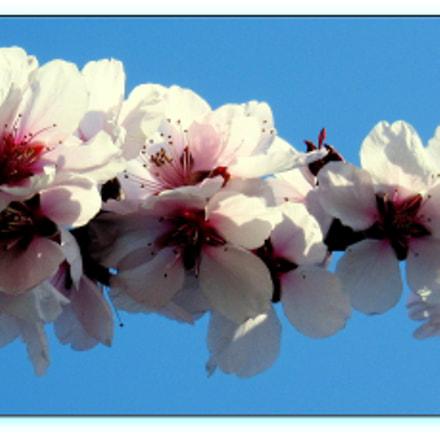 Tavaszi mosoly...  Spring Smile ..., Canon POWERSHOT SX600 HS