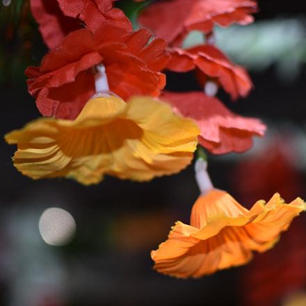 Bloomed Nature!!!, Nikon D3400, AF-S DX Nikkor 35mm f/1.8G