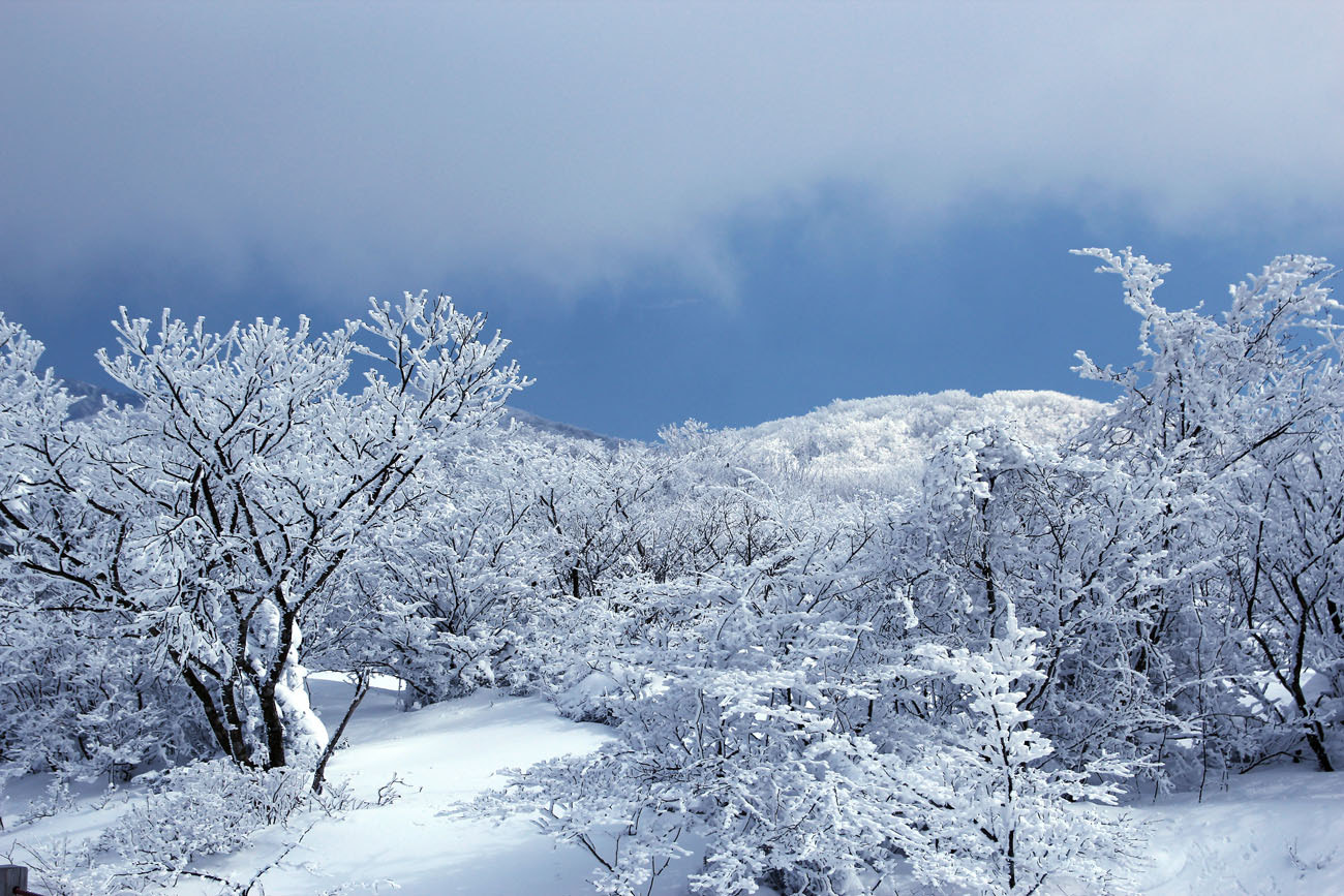 Photograph Winter, Hallasan National Park by Kiwon  Kim on 500px
