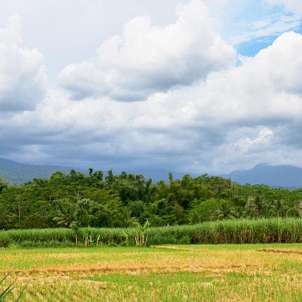 IOI Rural Vista, Nikon D5500, AF-S DX Nikkor 18-300mm f/3.5-5.6G ED VR