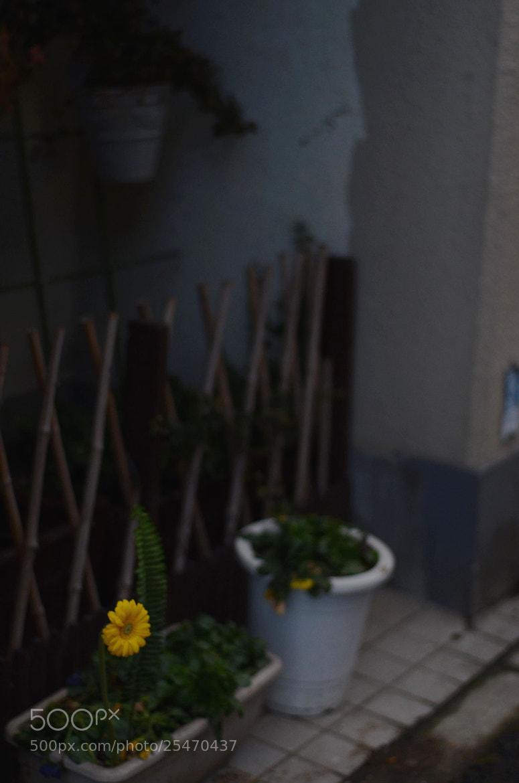 Photograph flower in cold by Sayaka Suzuki on 500px