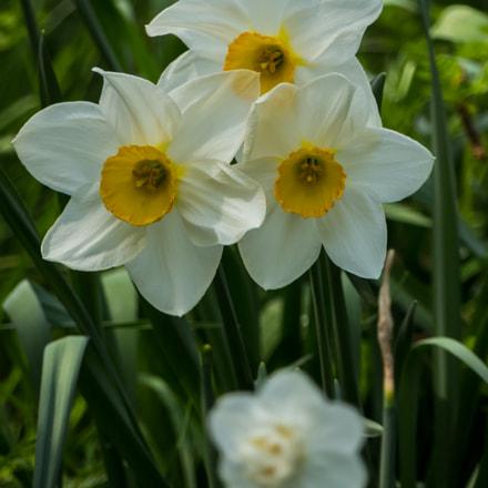 The Last Narcissus, Panasonic DMC-FZ330