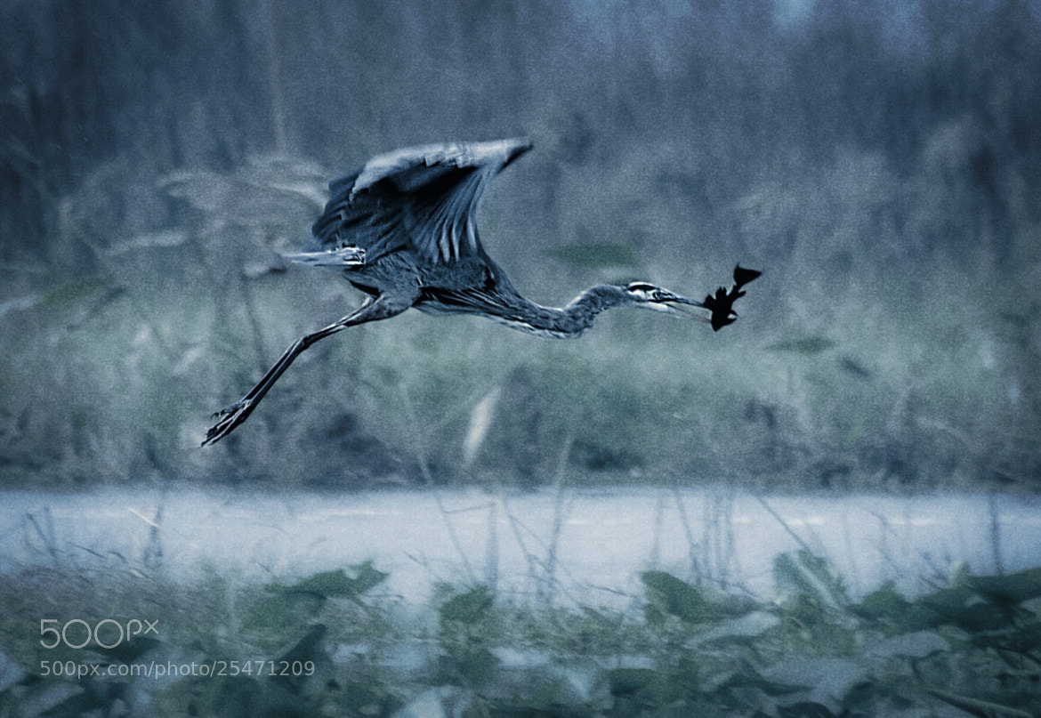 Photograph Fate by Stevan Tontich on 500px