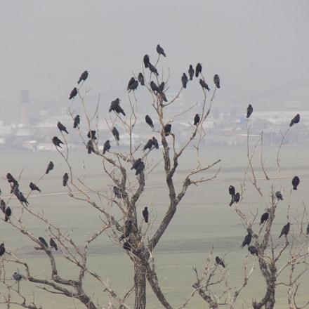 birds, Nikon COOLPIX L330