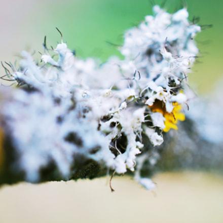 Moss, Nikon D60, AF-S DX Micro Nikkor 40mm f/2.8G
