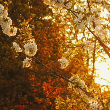 Spring blossoms, Nikon COOLPIX P7800