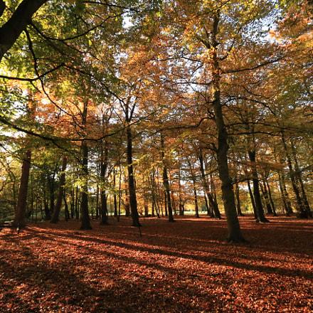 autumn colour, Canon EOS 70D, Canon EF-S 10-22mm f/3.5-4.5 USM