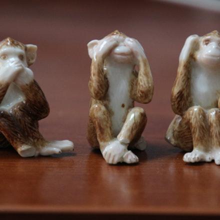 Monkeys or Humans, Canon EOS 100D, Tamron 16-300mm f/3.5-6.3 Di II VC PZD Macro