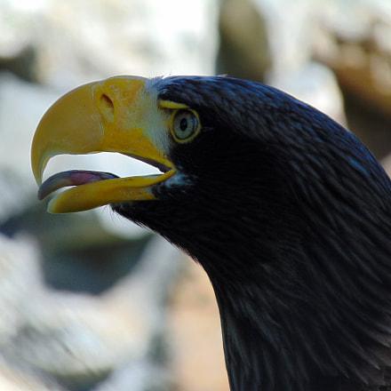 Eagle, Sony DSC-H300