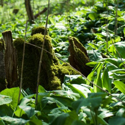 jungle., Sony ILCE-7, Sony FE 28-70mm F3.5-5.6 OSS