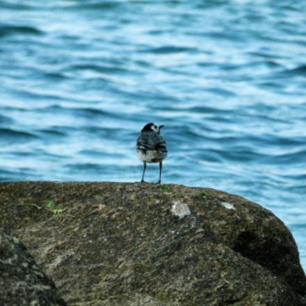 little bird, Canon POWERSHOT SX270 HS