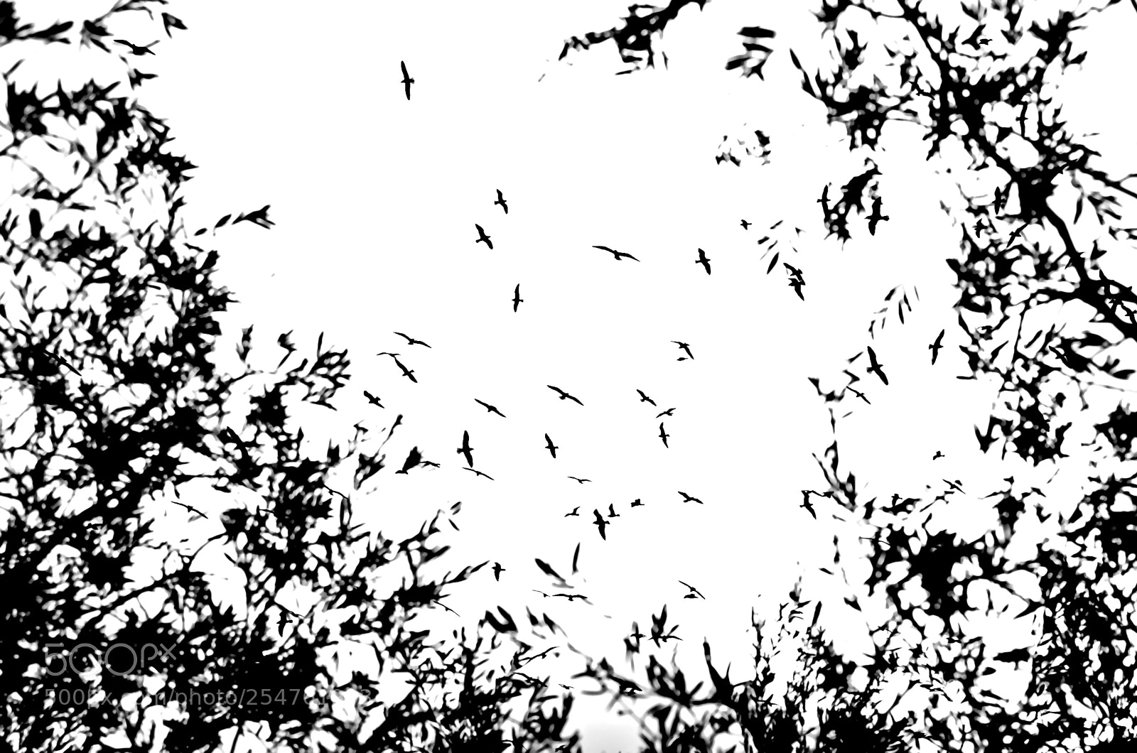 Bush Birds