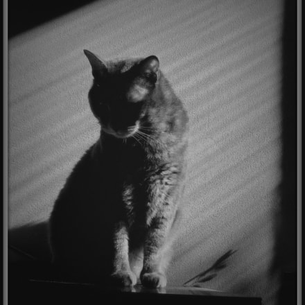 EL GATO, Canon POWERSHOT A3350 IS