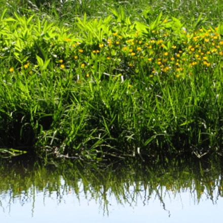 water grass, Canon POWERSHOT SX270 HS