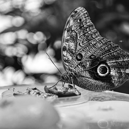 Butterfly, Nikon D7200, Sigma 17-50mm F2.8 EX DC OS HSM