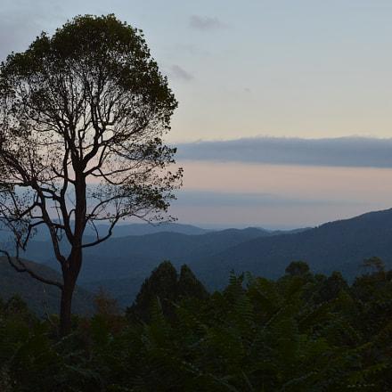 Lonely tree at Blue, Nikon D3200, AF-S DX Zoom-Nikkor 18-55mm f/3.5-5.6G ED II