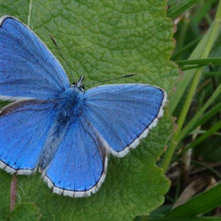 A Common blue not, Sony DSC-W690