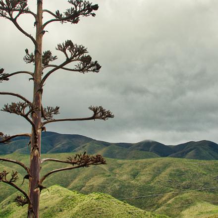 mountains through the agave, Nikon D7100, AF Zoom-Nikkor 35-135mm f/3.5-4.5 N