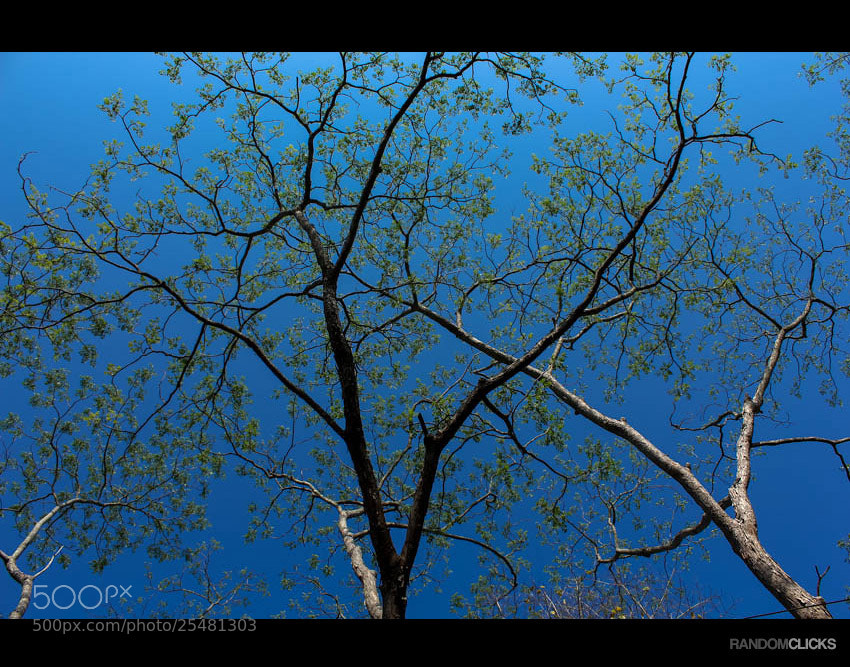 Photograph Blue and Green by Syam  on 500px