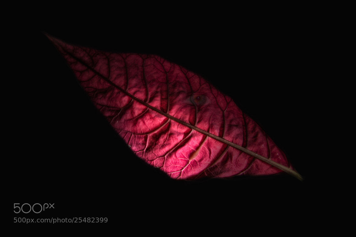 Photograph Leaf by Peter Jeppsson on 500px