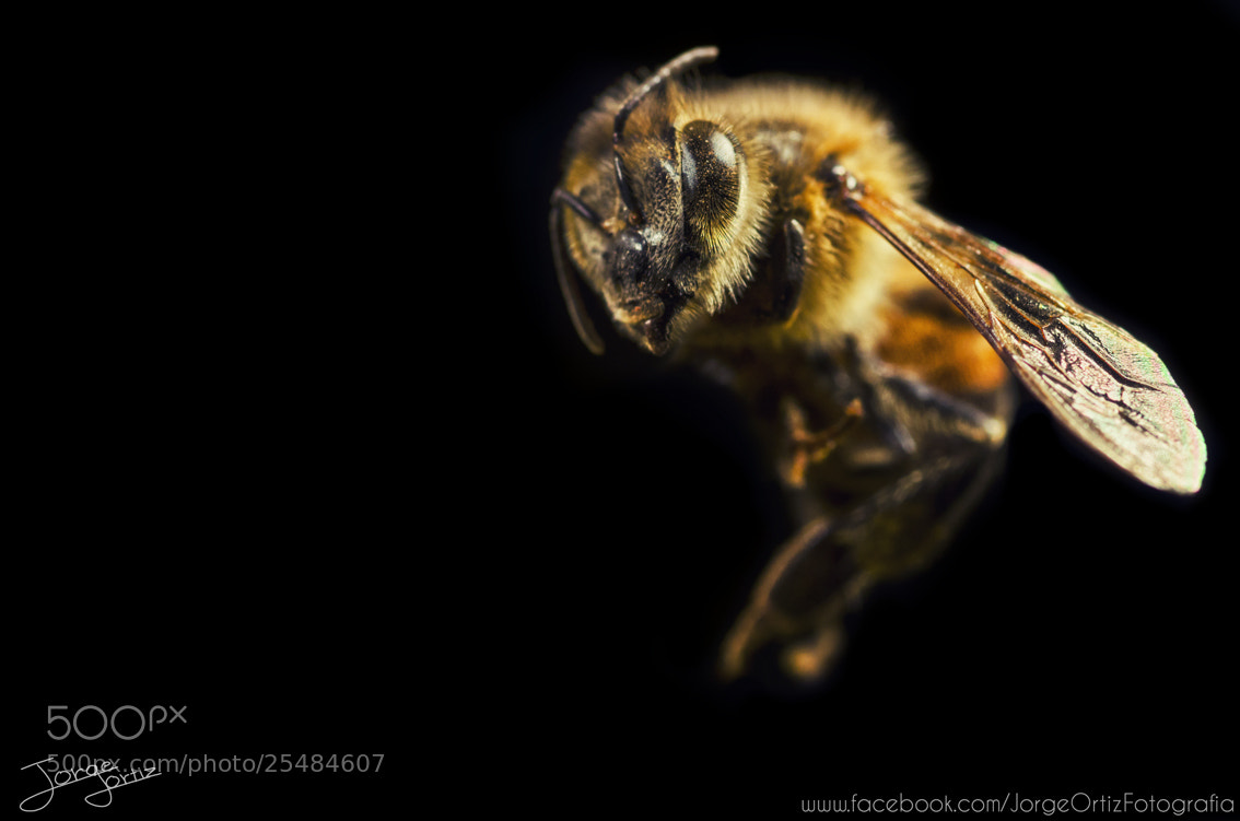 Photograph Bzzz by Jorge Ortiz on 500px