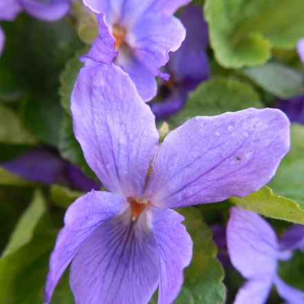 Violets?, Nikon COOLPIX L620